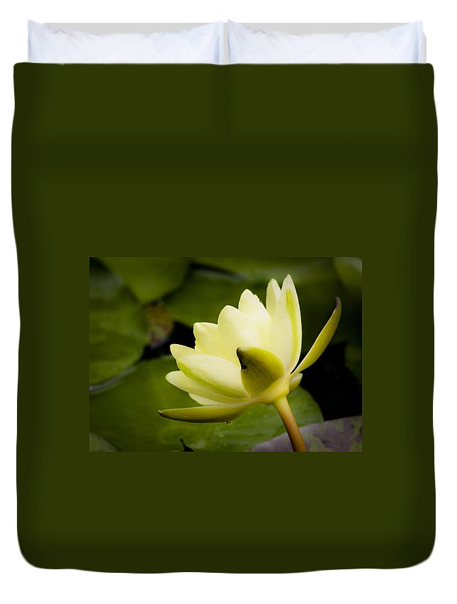 J Paul Getty Duvet Cover featuring the photograph Dreamy Water Lilly by Teresa Mucha