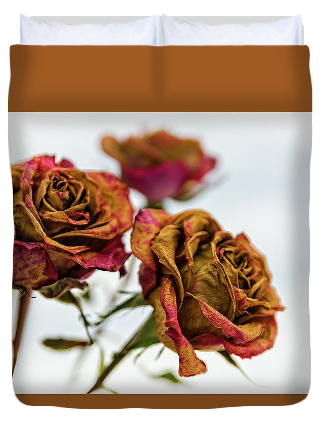 Duvet Cover featuring the photograph Dry Roses by Zbigniew Krol