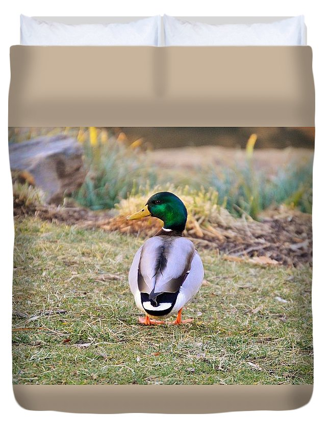 Duck Duvet Cover featuring the photograph Duck by Hannah Tanner