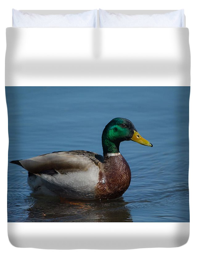 Duck Duvet Cover featuring the photograph Duck In Water by Bret Gardner