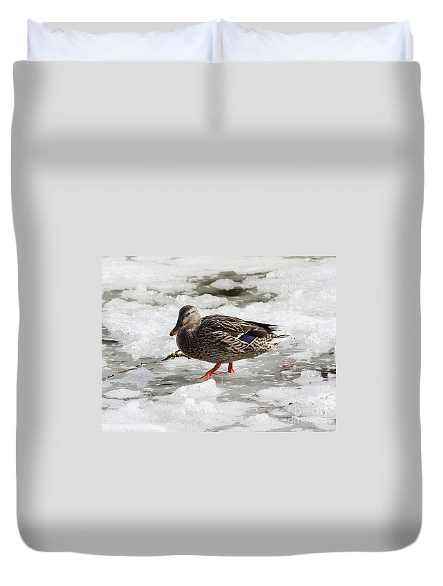 Duck Duvet Cover featuring the photograph Duck Walking On Thin Ice by Carol Groenen