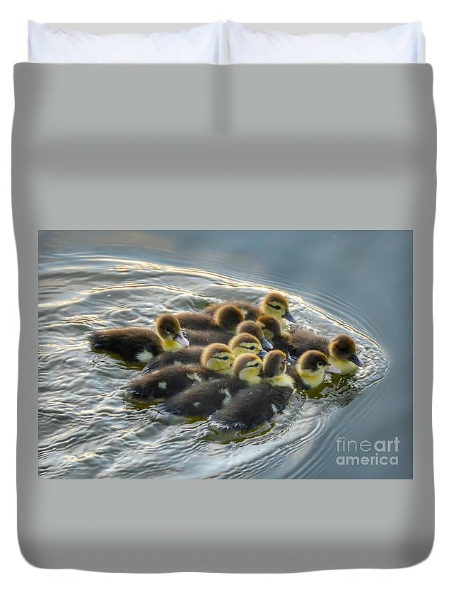 Birds Duvet Cover featuring the photograph Duckling Wake by Glenn Forman