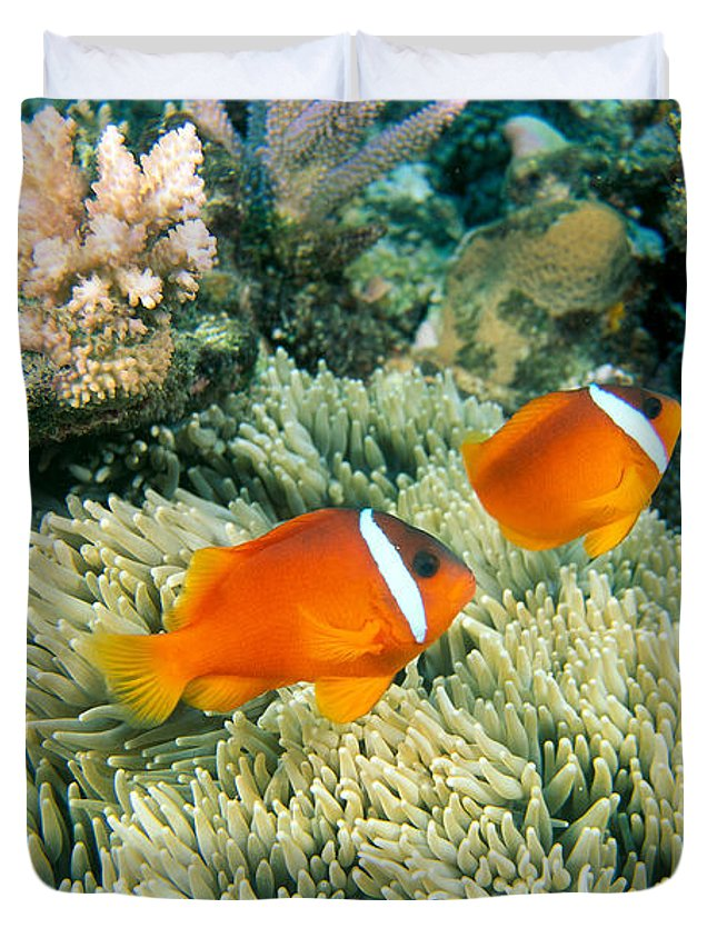 Amphiprion Melanopus Photographs Duvet Covers