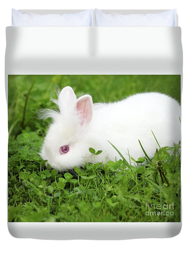 Rabbit Duvet Cover featuring the photograph Dwarf White Bunny Spring Scene by Goce Risteski
