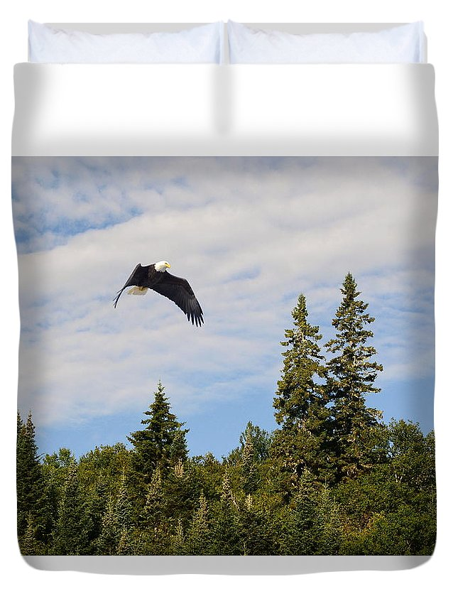 Eagle Duvet Cover featuring the photograph Eagle At Scott Brook by Harry Moulton