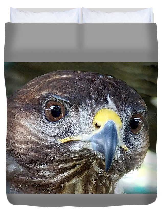 Eagle Duvet Cover featuring the photograph Eagle by Olja Simovic
