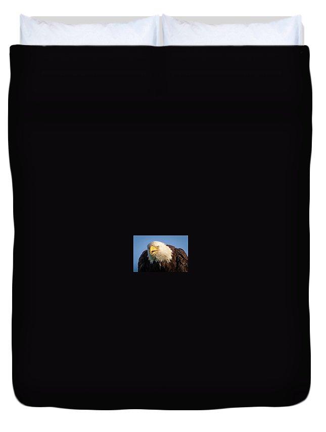 Eagle Duvet Cover featuring the photograph Eagle Stare 2 by Allin Sorenson