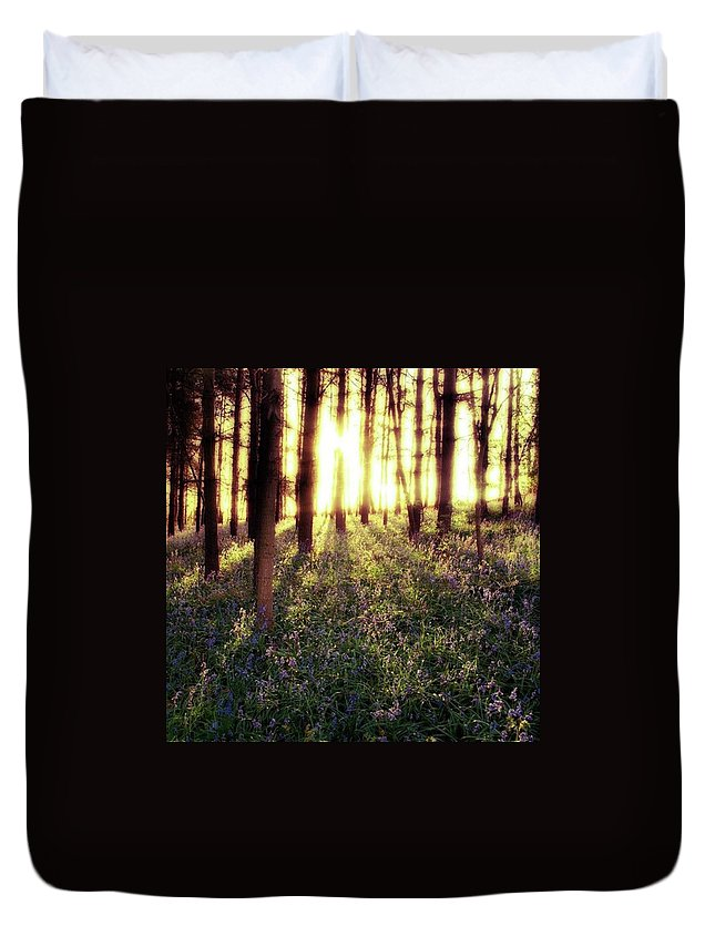 Sunrise Duvet Cover featuring the photograph Early Morning Amongst The by John Edwards