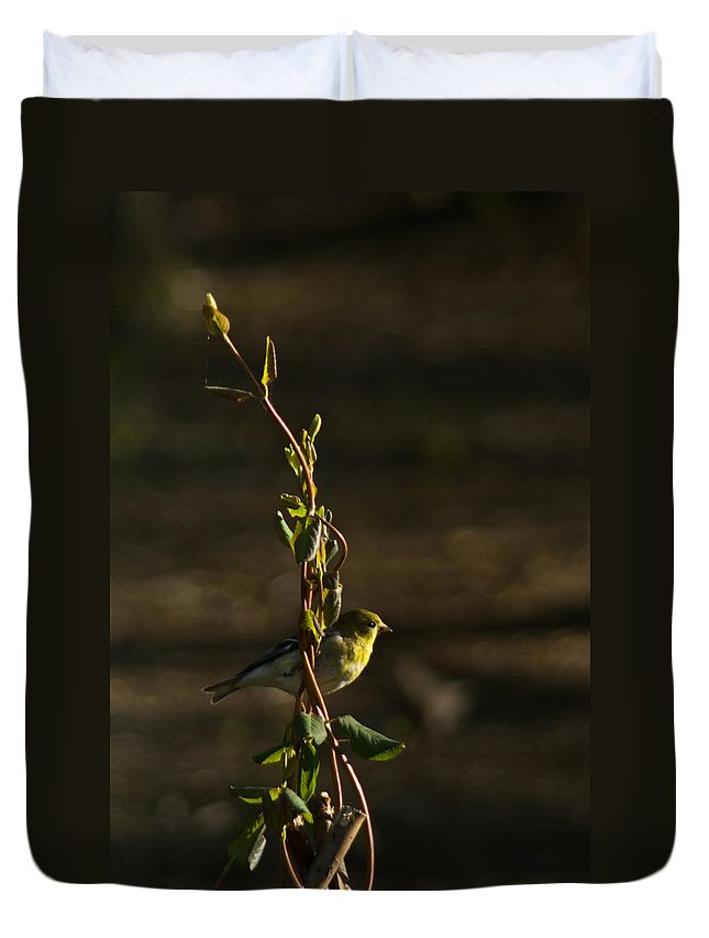 American Duvet Cover featuring the photograph Early Morning For American Golden Finch by Douglas Barnett