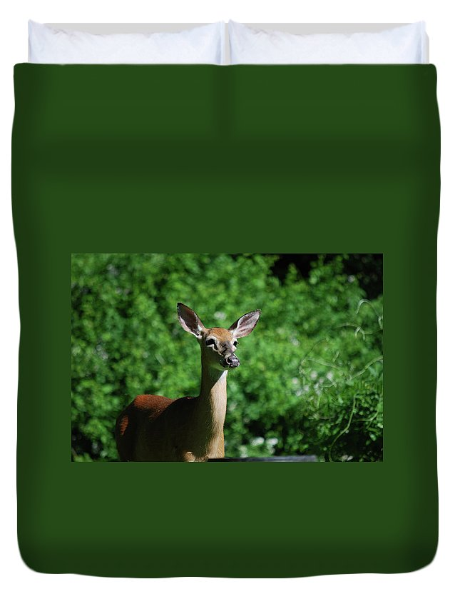 Deer Duvet Cover featuring the photograph Ears by Lori Tambakis