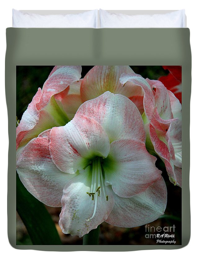 Amaryllis Duvet Cover featuring the photograph Easter Amaryllis by Barbara Bowen