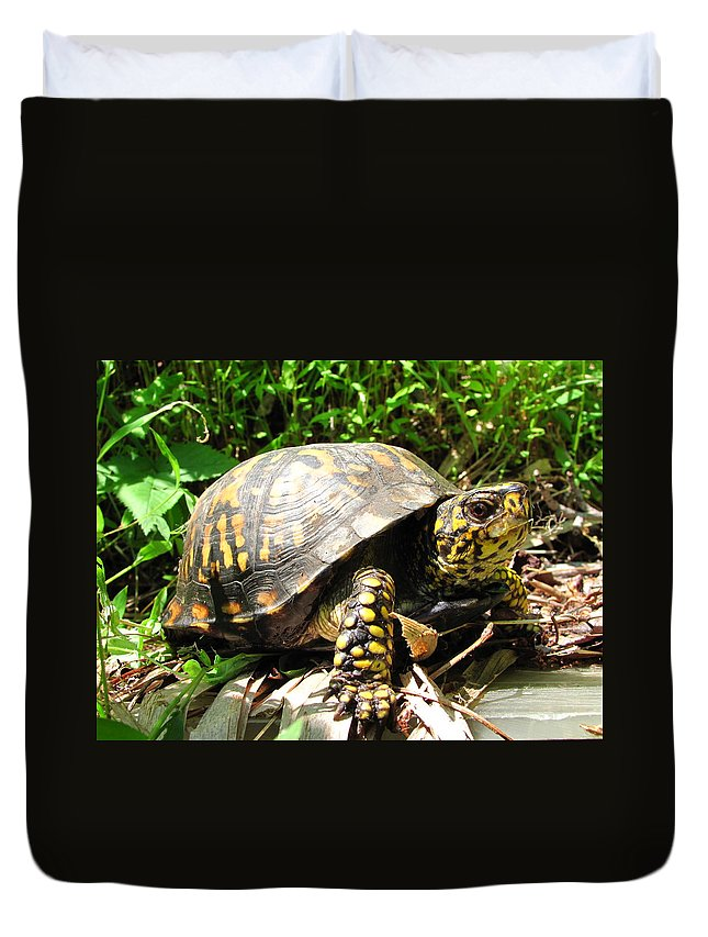 Maryland Eastern Box Turtle Images Terrestrial Turtle Images Box Turtle Photo Prints Biodiversity Forest Ecology Nature Reptile Prints Duvet Cover featuring the photograph Eastern Box Turtle by Joshua Bales