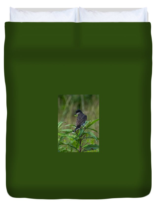 Eastern Kingbird Duvet Cover featuring the photograph Eastern Kingbird by Jan M Holden