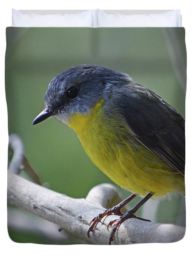Robin Duvet Cover featuring the photograph Eastern Yellow Robin by Peter Krause
