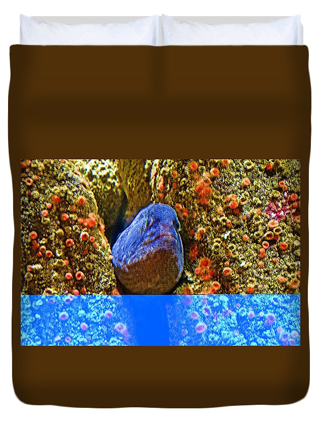 Eel In A Crack Between Two Anemone Worlds In Monterey Aquarium Duvet Cover featuring the photograph Eel In A Crack Between Two Anemone Worlds In Monterey Aquarium-california by Ruth Hager