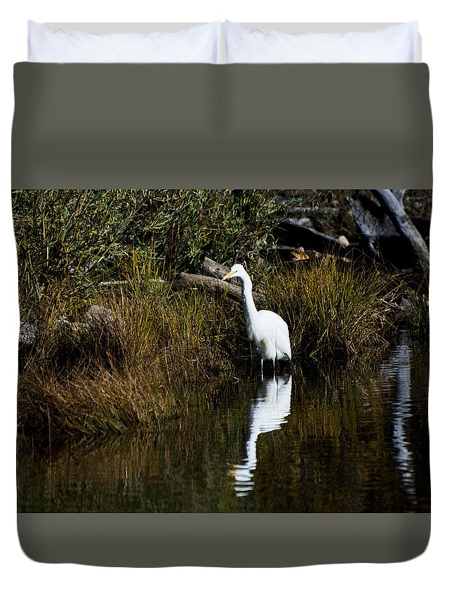 Bird Duvet Cover featuring the photograph Egret by Jamie Brewer