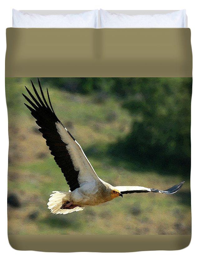 Egyptain Vulture In Flight Duvet Cover featuring the photograph Egyptain Vulture In Flight by Cliff Norton