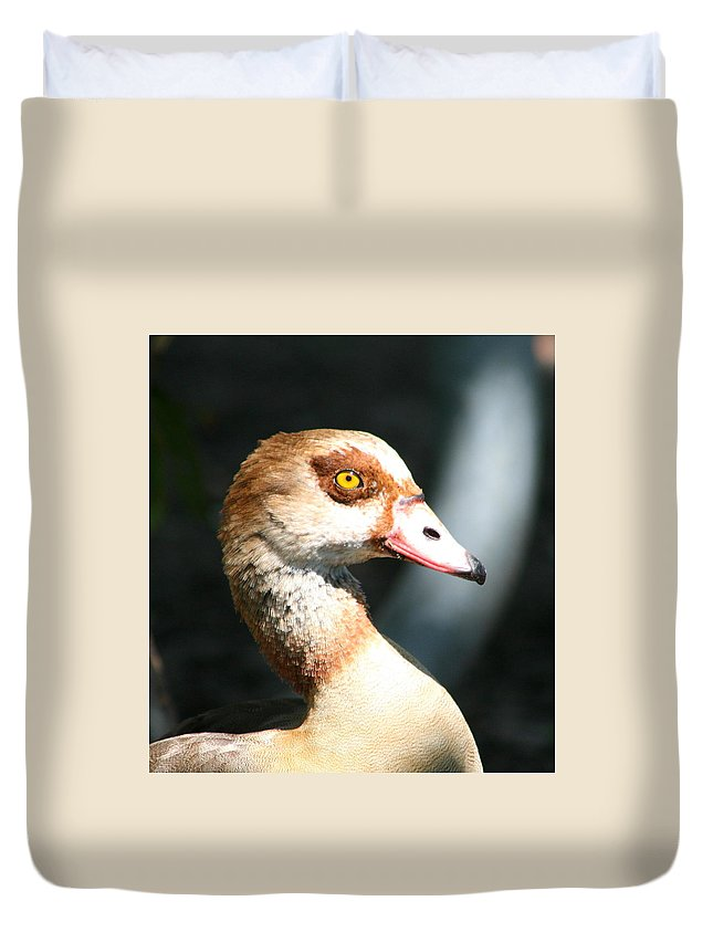 Egyptian Goose 2 Duvet Cover featuring the photograph Egyptian Goose 2 by Delphine Ross