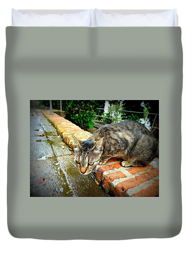 Cat Duvet Cover featuring the photograph El Gato Iv by Becki Kremer