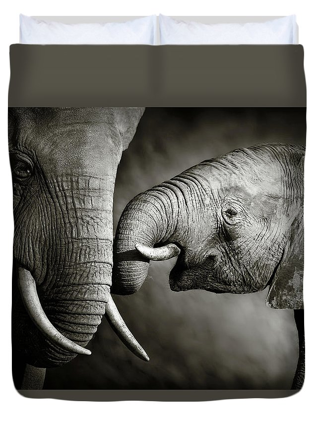 Elephant; Interact; Touch; Gently; Trunk; Young; Large; Small; Big; Tusk; Together; Togetherness; Passionate; Affectionate; Behavior; Art; Artistic; Black; White; B&w; Monochrome; Image; African; Animal; Wildlife; Wild; Mammal; Animal; Two; Moody; Outdoor; Nature; Africa; Nobody; Photograph; Addo; National; Park; Loxodonta; Africana; Muddy; Caring; Passion; Affection; Show; Display; Reach Duvet Cover featuring the photograph Elephant affection by Johan Swanepoel
