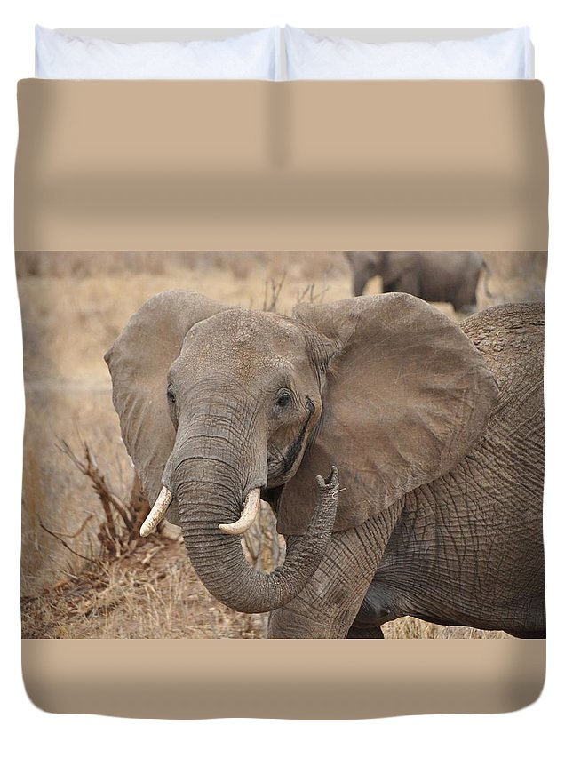 Wildlife Duvet Cover featuring the photograph Elephant by Rachel Young