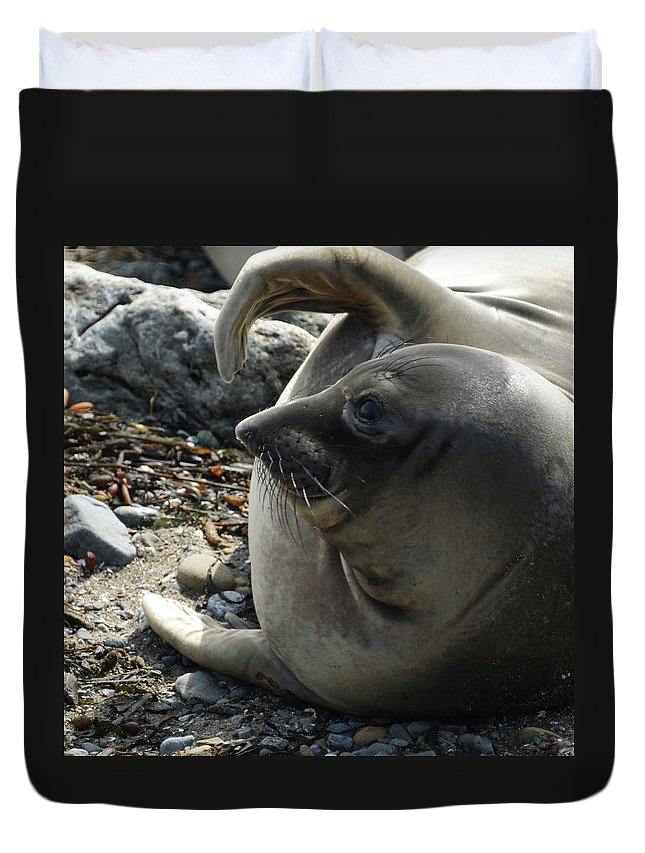 Elephant Seals Duvet Cover featuring the photograph Elephant Seal by Ernie Echols
