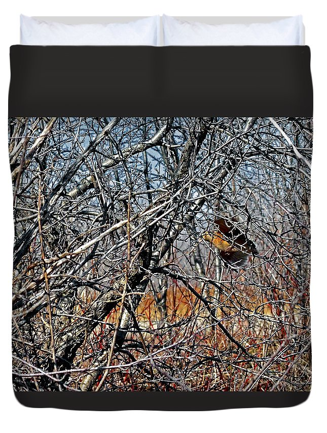 American Woodcock Duvet Cover featuring the photograph Elusive Woodcock's Woody Environment by Asbed Iskedjian