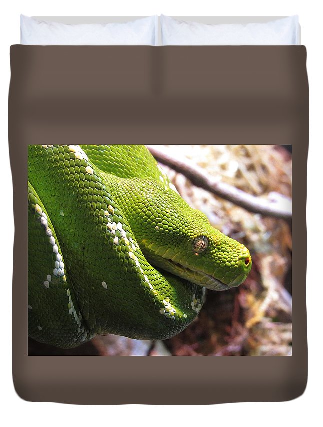 Emerald Tree Boa Duvet Cover featuring the photograph Emerald Tree Boa by Chip Gilbert