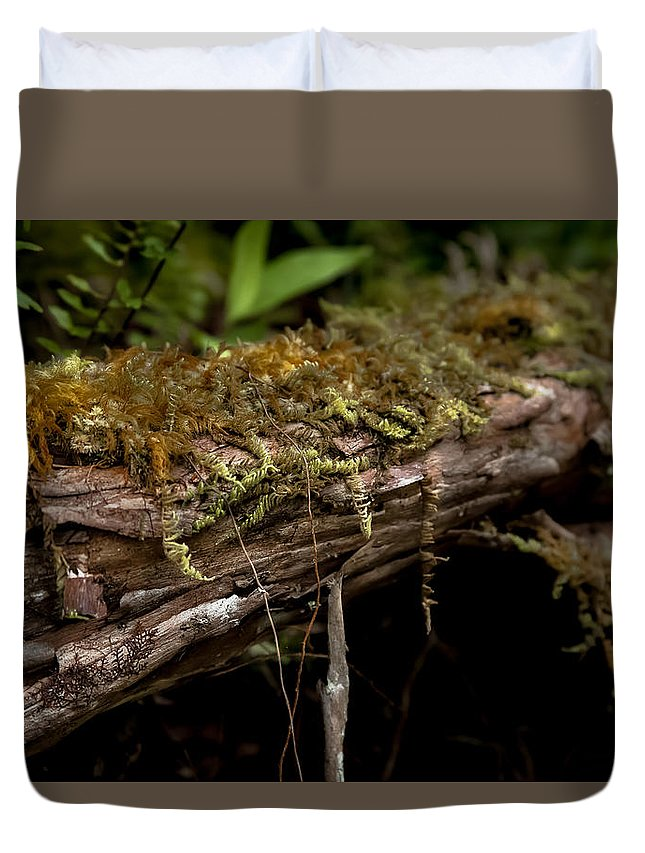 Fern Duvet Cover featuring the photograph Enchanted Forest by Craig Watanabe