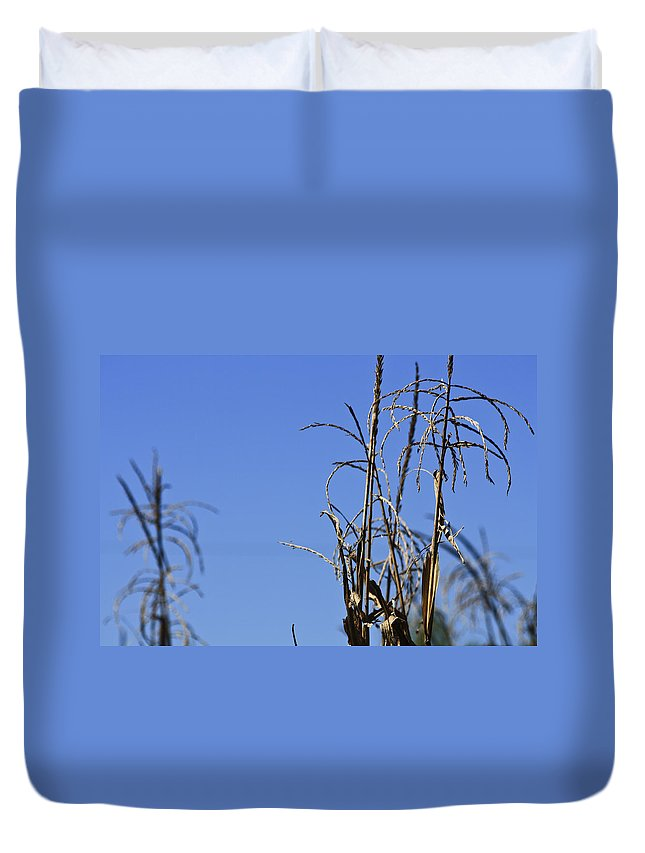 Corn Duvet Cover featuring the photograph End Of Season by Teresa Mucha