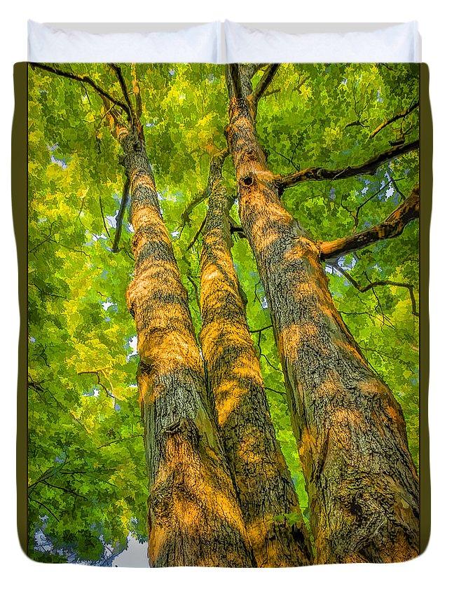Enlightened Duvet Cover featuring the photograph Enlightened Trees by LeeAnn McLaneGoetz McLaneGoetzStudioLLCcom