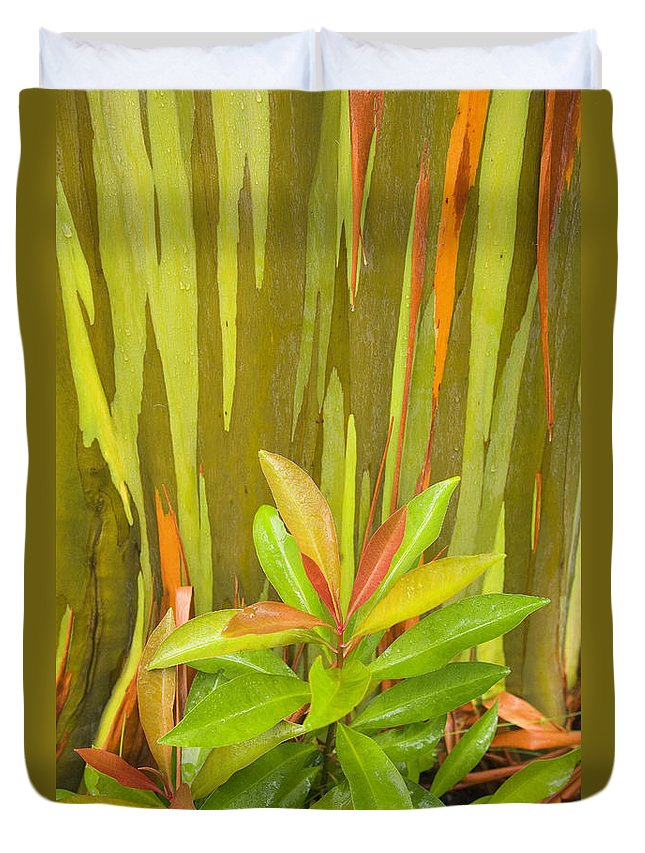 Background Duvet Cover featuring the photograph Eucalyptus And Leaves by Ron Dahlquist - Printscapes