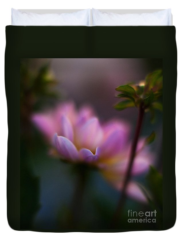 Evening Duvet Cover featuring the photograph Evening Dahlia by Mike Reid