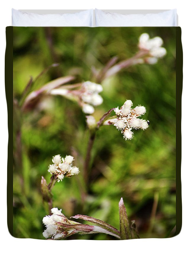 Botanical Duvet Cover featuring the photograph Everlasting by Christina Rollo