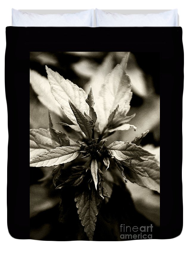 Plant Duvet Cover featuring the photograph Evermore by Linda Shafer