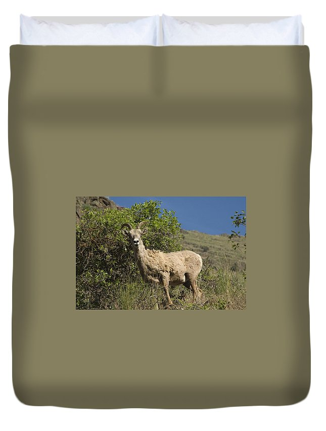 Sheep Duvet Cover featuring the photograph Ewe 3 by Sara Stevenson