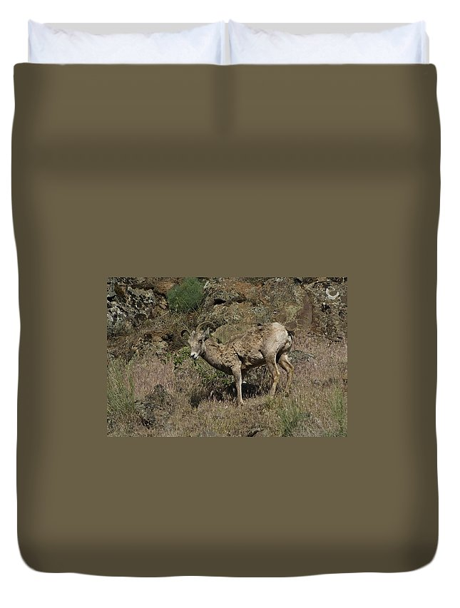 Goat Duvet Cover featuring the photograph Ewe 5 by Sara Stevenson
