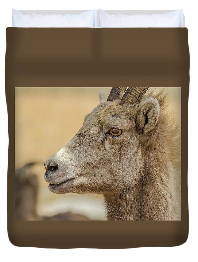 Ewe Duvet Cover featuring the photograph Ewe Glow At Sunset by Yeates Photography