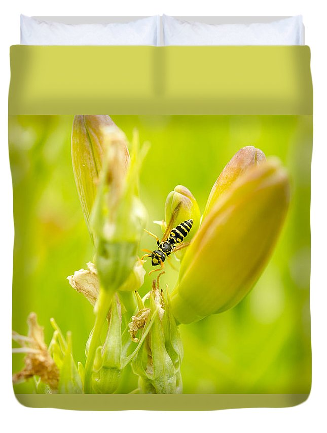 Lillies Duvet Cover featuring the photograph Exploring by Kathy Paynter