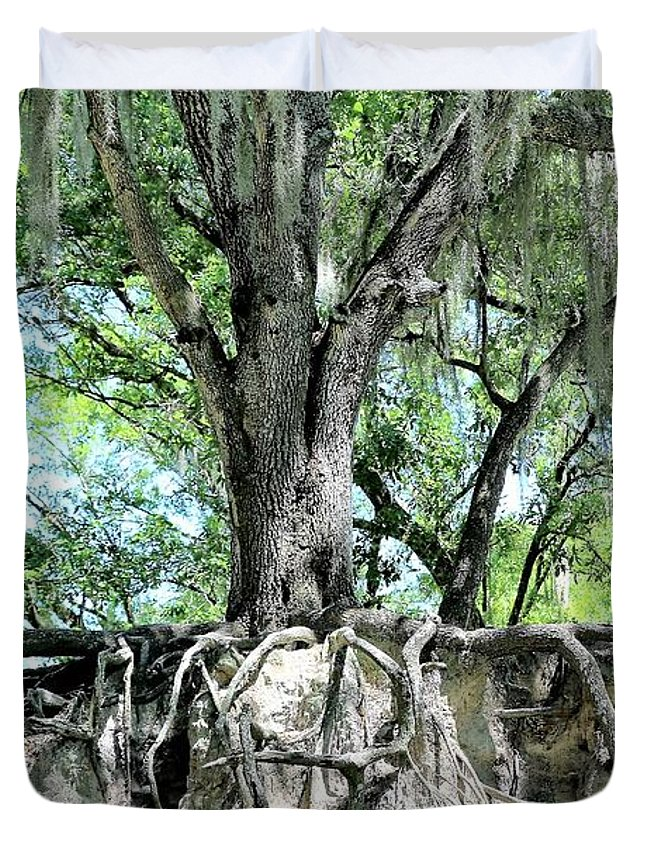 Oak Duvet Cover featuring the photograph Exposed - Oak Roots by Diann Fisher