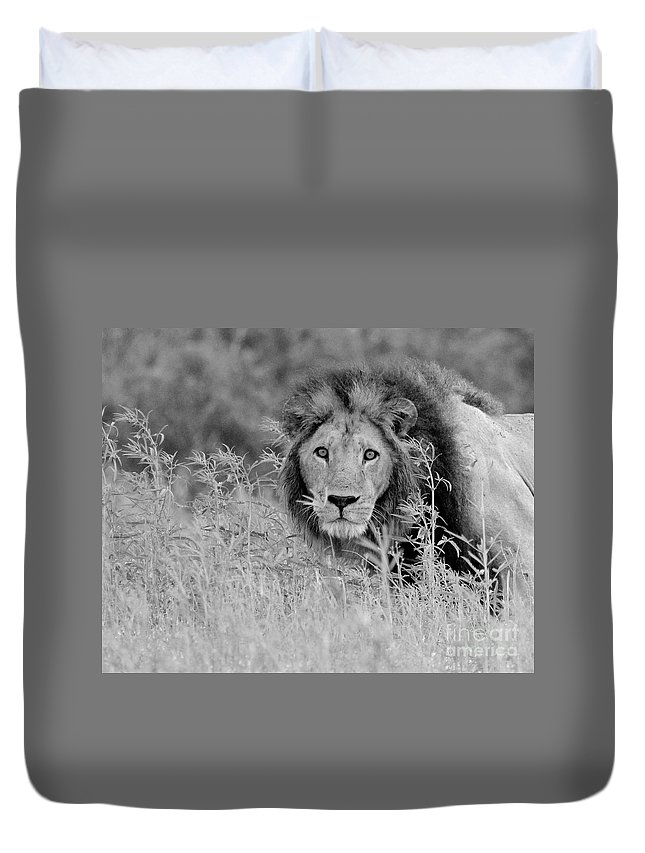 Lion Duvet Cover featuring the photograph Eyes Of Uncertainty by Roger Brown