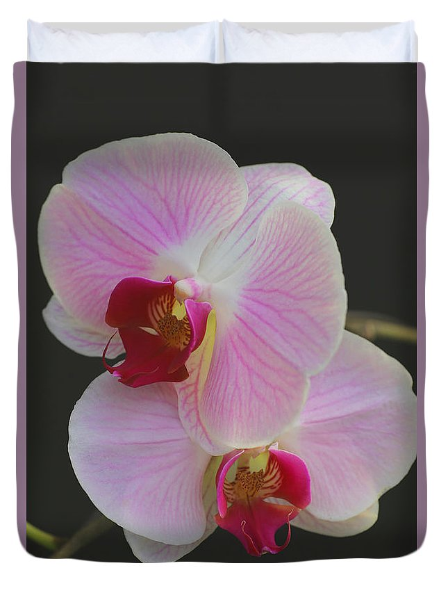 Orchids Duvet Cover featuring the photograph Fairy Blush Orchids by Tammy Pool