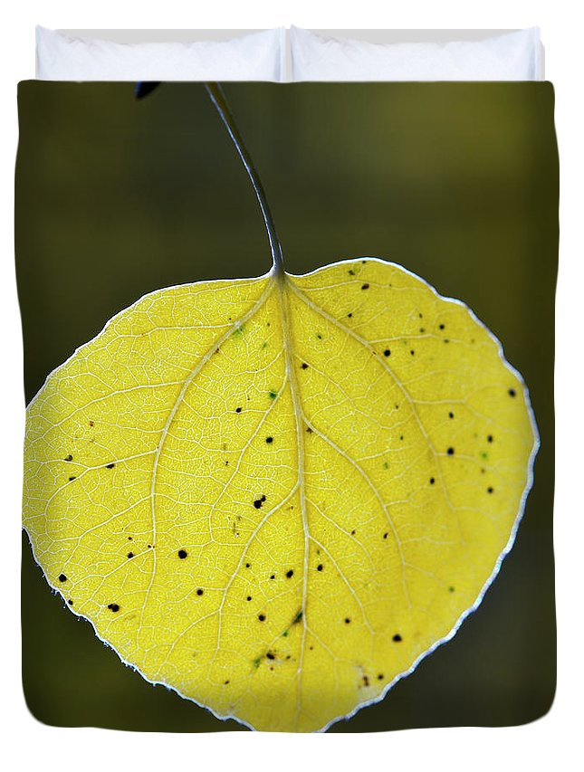 Fall Aspen Leaf Duvet Cover featuring the photograph Fall Aspen Leaf by Gary Langley
