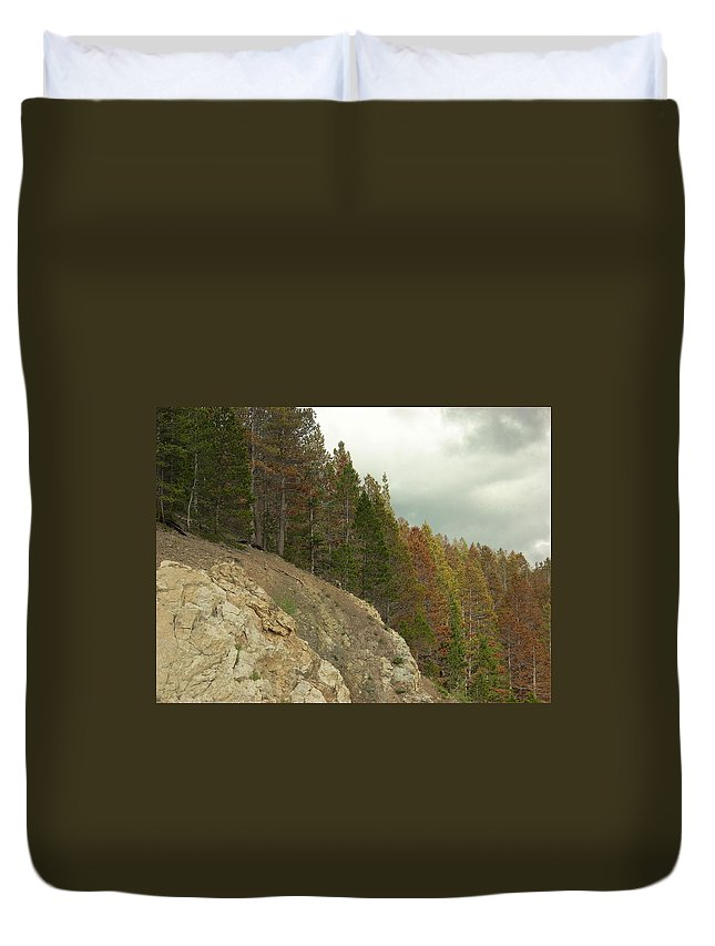Trees Duvet Cover featuring the photograph Fall Color Evergreens by Sara Stevenson
