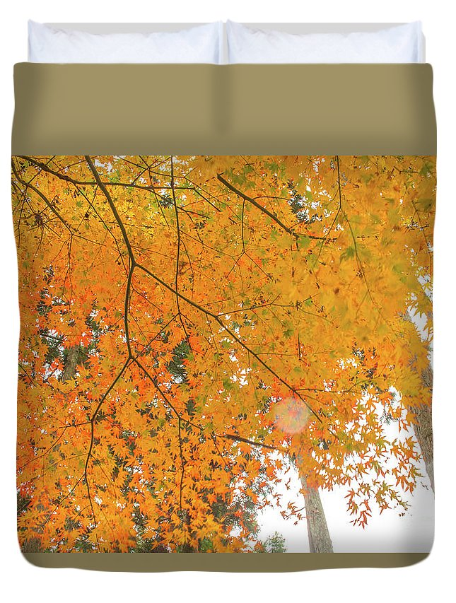 Aichi Duvet Cover featuring the photograph Fall Color Maple Leaves At The Forest In Aichi, Nagoya, Japan by Eiko Tsuchiya