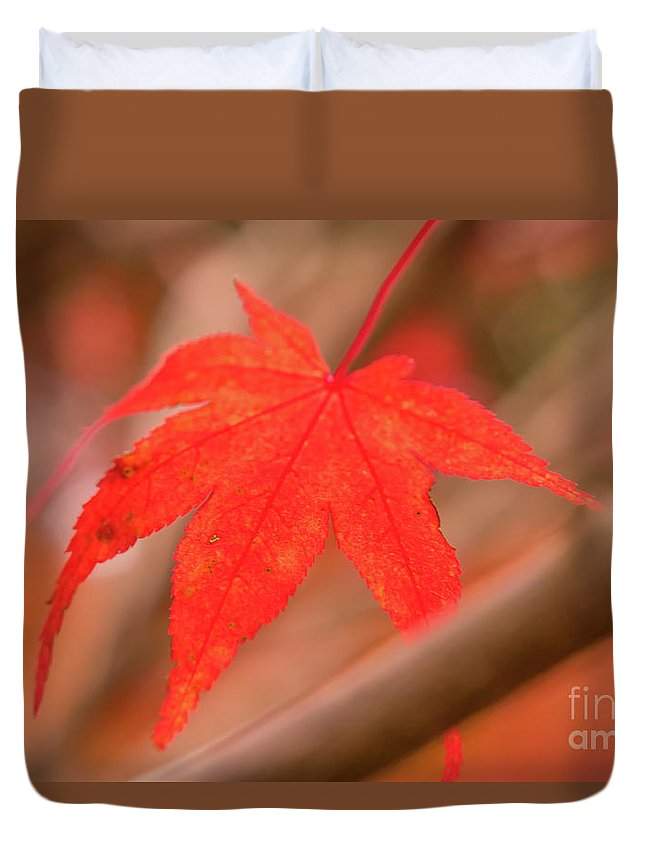 Asia Duvet Cover featuring the photograph Fall Color Maple Leaves At The Forest In Kamakura, Kanagawa, Jap by Eiko Tsuchiya