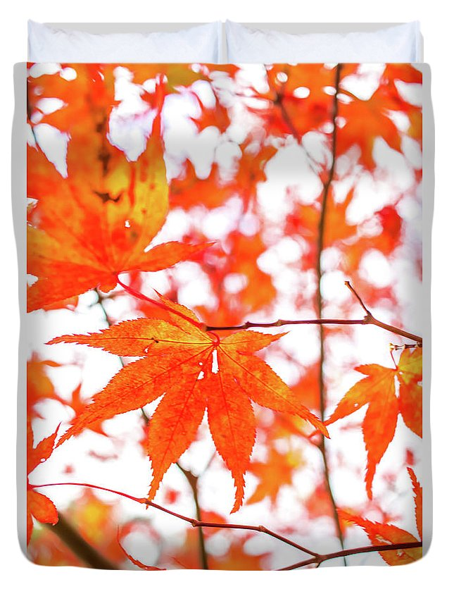 Asia Duvet Cover featuring the photograph Fall Color Maple Leaves At The Forest In Kumamoto, Japan by Eiko Tsuchiya