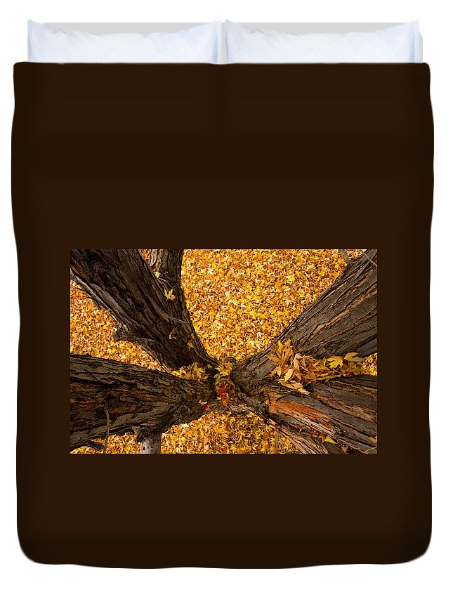 Maple Duvet Cover featuring the photograph Fall by James BO Insogna