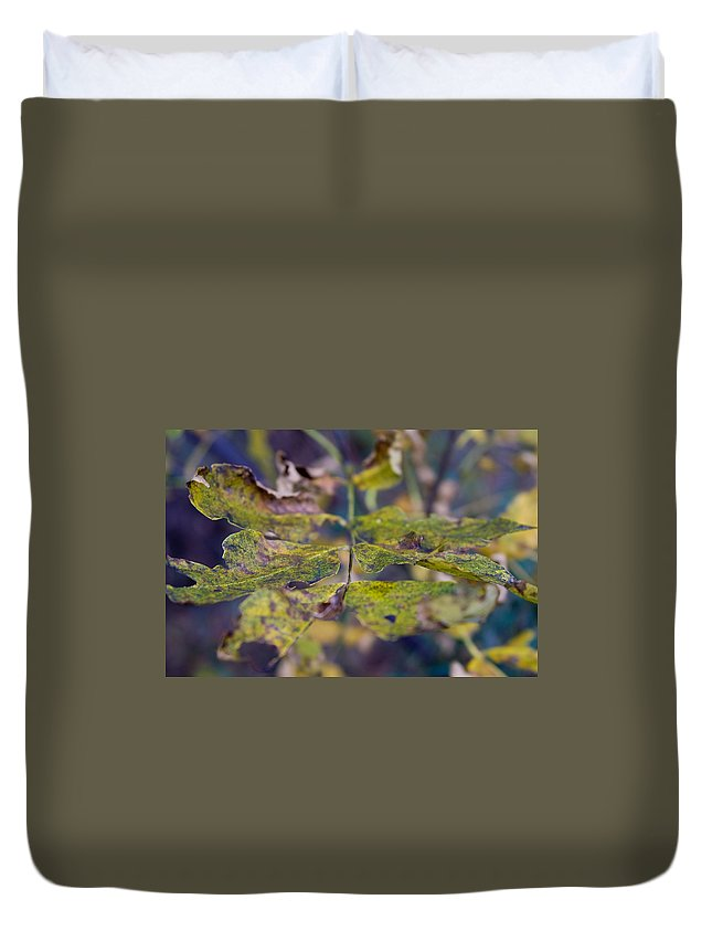 Leaves Duvet Cover featuring the photograph Fall Leaves by Bob Mintie