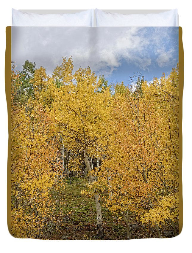 Leaves Duvet Cover featuring the photograph Fall Leaves by Richard Keer